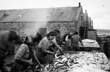 Gutting Herring at Shearers Station, Lerwick. 1940s, Photo: Shetland Museum and Archives