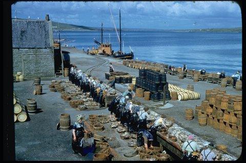 Gutting herring at Shearer's Station, Garthspool, herring drifter 'Research' LK 62 in the background Photo: Magnie Shearer