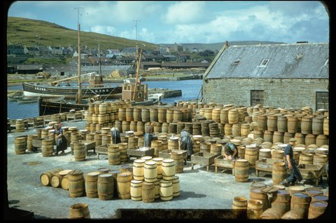 Packing th gutted herring into the barrels. The cooper on the far right of the photo is Magnus Shearer (Arthur's son) Photo: Magnie Shearer