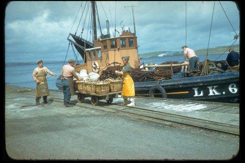Research LK 62 landing herrings at Garthspool, to J&M Shearer. Photo: Magnie Shearer