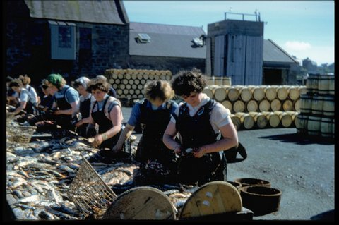 Women gutting herring in the farlins at Shearer's Station, Garthspool. Photo: Magnie Shearer