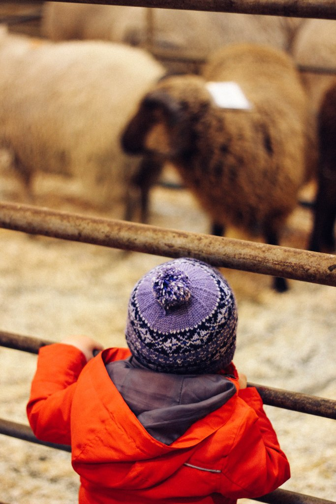 My nephew Magnie looking at sheep at the marts